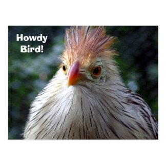 Grüß dich Vogel! Postkarte