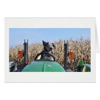 Gruß-Karte - Hund, der Traktor fährt Karte