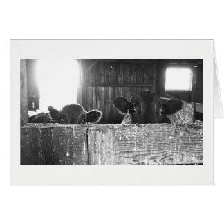 Gruß-Karte - Kühe, die entsetzt schauen Karte