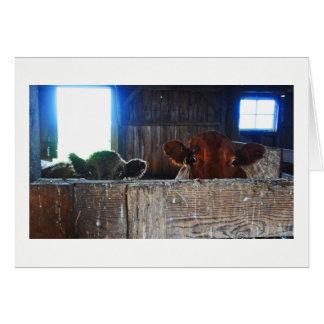 Gruß-Karte - Kühe in der Scheune, die entsetzt Karte