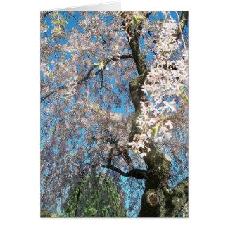 Gruß-Karte mit weißer, blühender Baum-Foto Karte