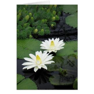 Gruß-Karte - zwei weißes Wasser-Lilien Karte
