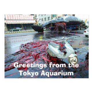 Grüße vom Tokyo-Aquarium Postkarte