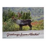 Grüße von Alaska! Postkarten