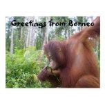 Grüße von Borneo Postkarte