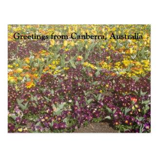 Grüße von Canberra, Australien Postkarte