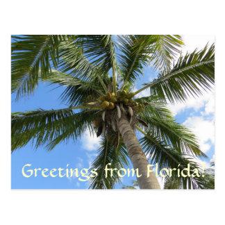 Grüße von der Florida-/KokosnussPalme Postkarte