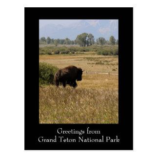 Grüße von der großartigen Teton Postkarte