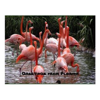"""""""Grüße von Florida,"""" Flamingopostkarte Postkarte"""