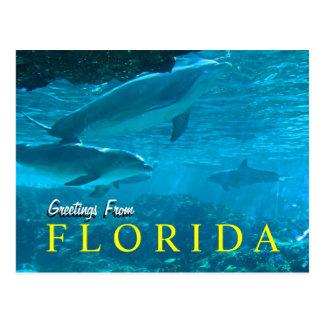 Grüße von Florida-Postkarte Postkarte
