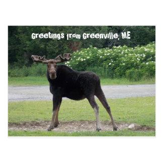 Grüße von Greenville 1 Postkarte