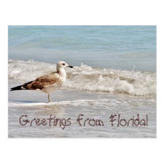 Grüße von Seemöwe Floridas Miami Postkarte