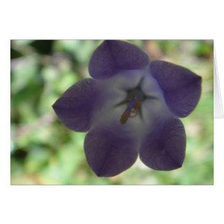 Grusskarte Glockenblume mit Stern, blanko Grußkarte