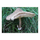 Grusskarte grosser Pilz mit hübschem Hut, blanko Grußkarte
