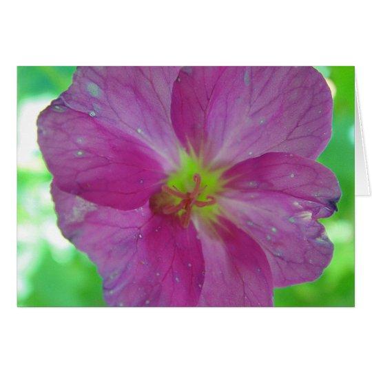 Grusskarte pink-gelbe Wildblüte, blanko Karte