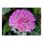 Grusskarte rosa Kleeblüte mit Eiskristallen Grußkarte