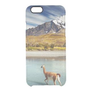 Guanaco, der den Fluss in Torres Del Paine kreuzt Durchsichtige iPhone 6/6S Hülle