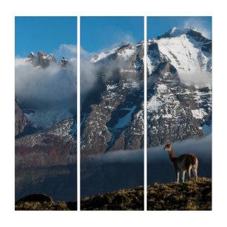 Guanaco im Chilen der Berg  Triptychon