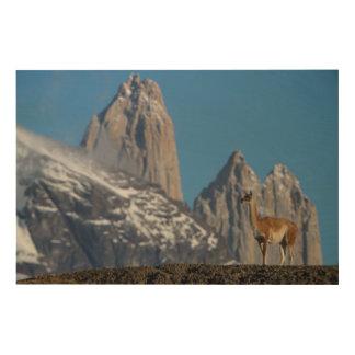 Guanaco in Chilen Torres Del Paine   Holzdruck