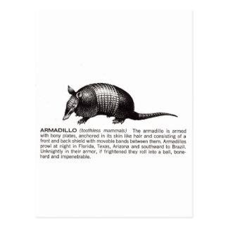 Gürteltier Postkarte