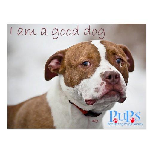 Gute HundePitbull-Rettung Postkarten