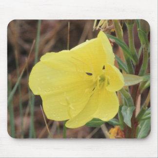 Haarige Abends-Primel-Blüte Mousepad