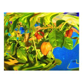 Habanero-Paprikaschoten auf Trippy Foto der Pflanz Flyers