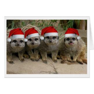 Haben Sie ein Meerkat Weihnachten! Karte