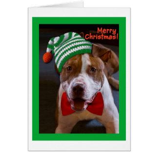 Haben Sie ein Pitbull-Weihnachten Karte