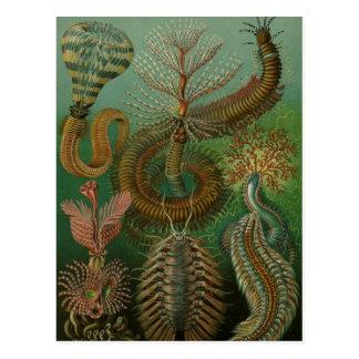 Haeckel Hundertfüßer Postkarte