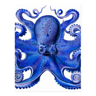 Haeckel Kraken-Blau Postkarte