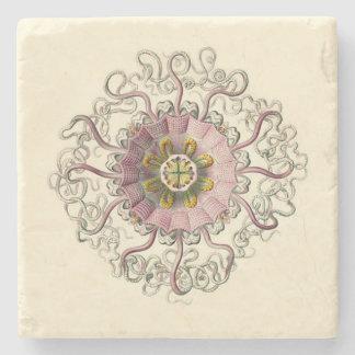 Haeckel Peromedusa Untersetzer