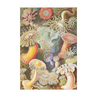 Haeckel Seeanemonen-Leinwanddruck Leinwanddruck