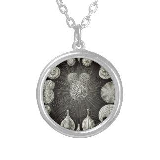 Haeckel Thalamphora Halskette Mit Rundem Anhänger