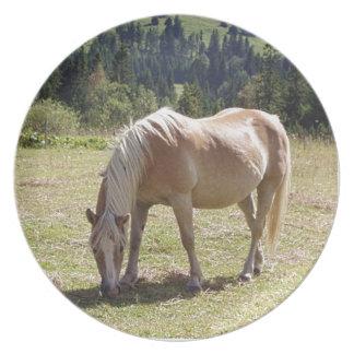 Haflinger Palomino-Pony im grünen Weiden-Foto Teller