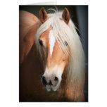 Haflinger Pferd Grußkarte