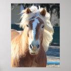 Haflinger Pferd Poster