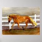 Haflinger Pferdeporträt Poster