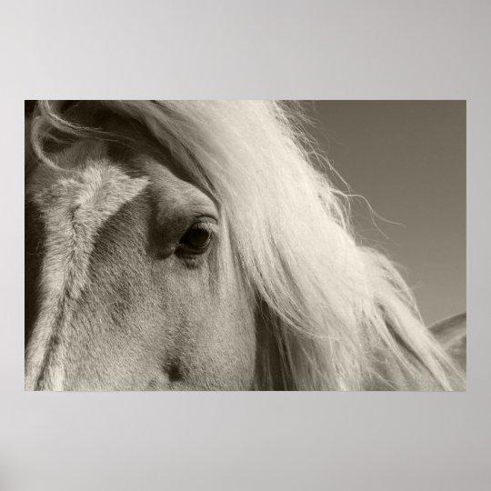 Haflinger Porträt - Horse - cheval Poster