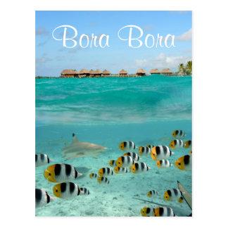 Haifisch, der Fische Bora Bora in der Postkarte