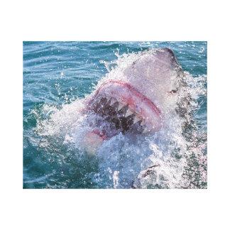 Haifisch im Wasser Leinwanddruck
