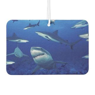 Haifisch-Luft Freshner Lufterfrischer