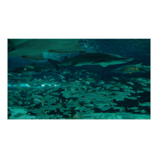 Haifische Poster
