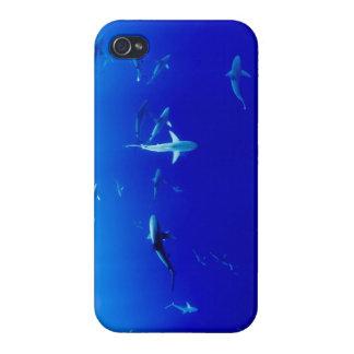 Haifische Unterwasser iPhone 4/4S Cover