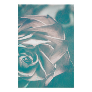 Halfe Rose Plakatdruck