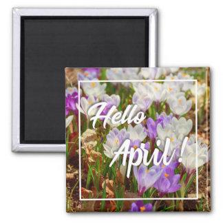 Hallo April! Zitat-Magnet Quadratischer Magnet