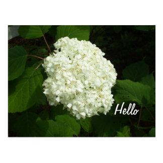 Hallo-Ein große Schneeballhydrangeas-Blume Postkarte
