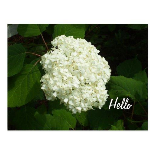 Hallo-Ein große Schneeballhydrangeas-Blume Postkarten