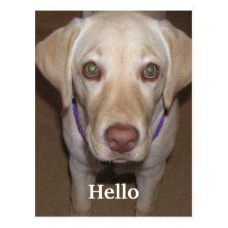 Hallo gelbe Labrador-Postkarte Postkarte