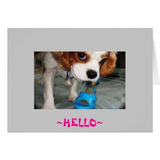 hallo Hund Karte